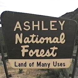Ashley National Forest